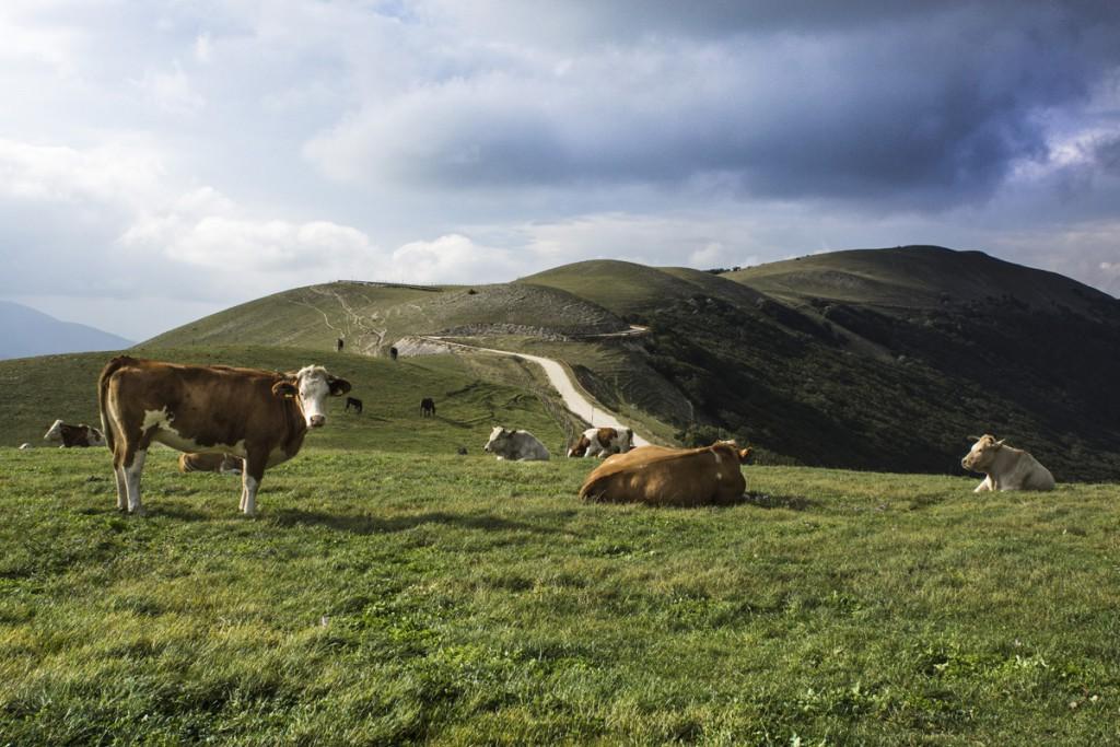 Risultati immagini per Marche: agricoltura contadina
